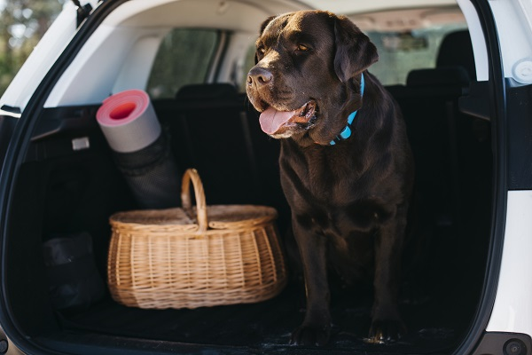 tapis chien voiture protection